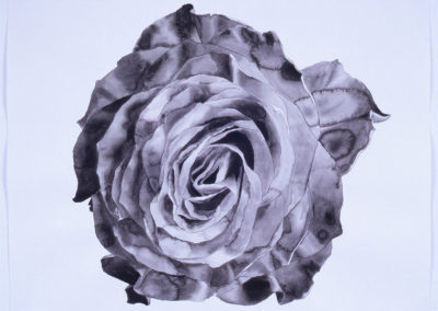 aquarel roos van Wim Konings in zwart wit