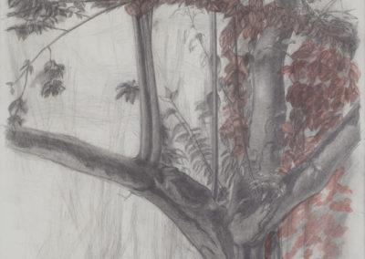 gemengde technieken werk van Wim Konings, boomstudie