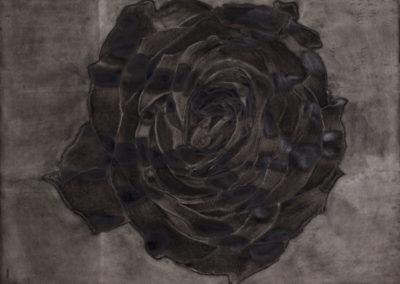 aquarel van een zwarte roos van Wim Konings