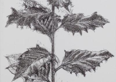 tekening van een hulsttak van Wim Konings