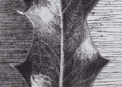 tekening van een hulstblad van Wim Konings