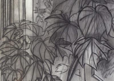 tekening van een venster met plant van Wim Konings